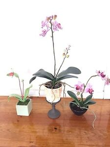 Lifelike orchids for sale Balwyn Boroondara Area Preview