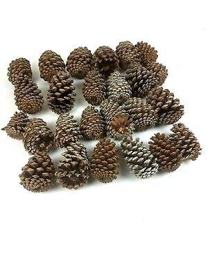 Pine Cone Craft (Natural Pine Cone Cones Art Decor Decoration Crafts Lot of)