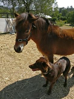 Luna - Project Pony