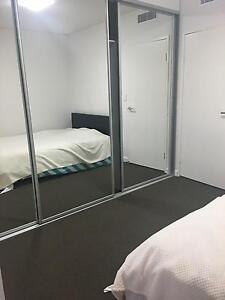 Apartment room avalible in parramata river rd Parramatta Parramatta Area Preview
