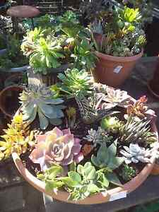 Garage sale succulents plants and pots Bidwill Blacktown Area Preview