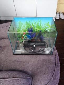 Small Fish Tank Mooroobool Cairns City Preview