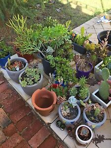 Pot plants for sale North Beach Stirling Area Preview