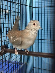 Diamond Doves Kijiji In Ontario Buy Sell Save With Canadas