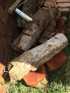 Free tree stumps for firewood Bray Park Pine Rivers Area Preview