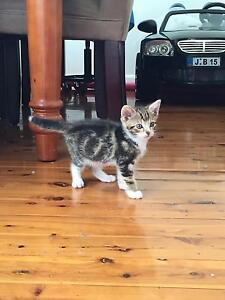 Free kittens to good home Old Guildford Fairfield Area Preview