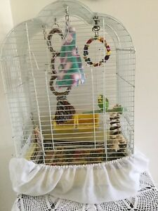 Budgie with cage(including everything)