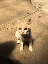 Male cat for free Meadow Heights Hume Area Preview