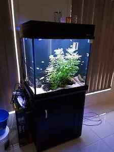 Fish Tank/Marine tank Ormeau Gold Coast North Preview