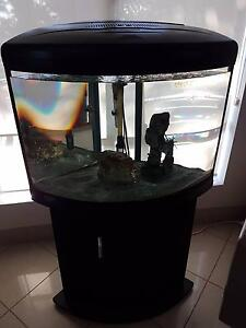 Price Reduced - Almost New 80L Black Fish tank Narwee Canterbury Area Preview