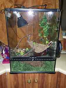 Terarium for sale Stockport Clare Area Preview