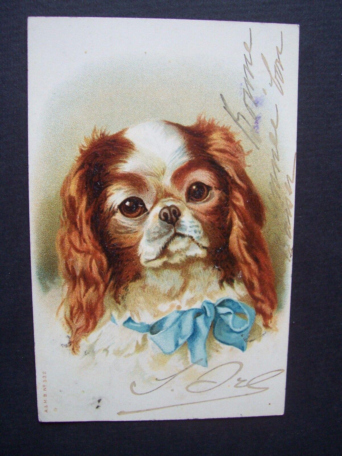 Cpa  - chien - cavalier king charles spaniel  ( ? ) - illustrateur non mentionné