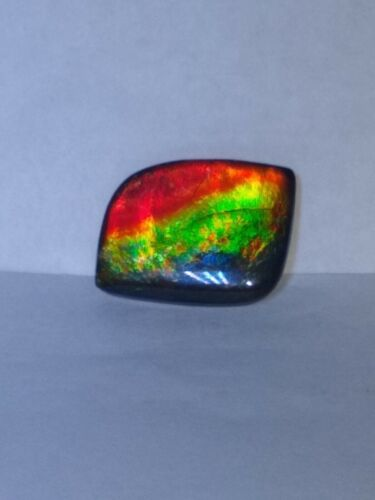 26x16mm Freeform Gorgeous Ammolite