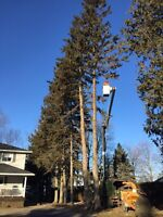 Branch brothers tree care