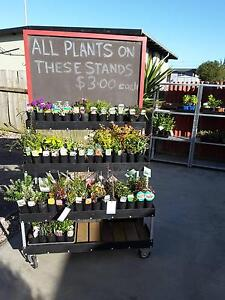 plants for sale Wynyard Waratah Area Preview