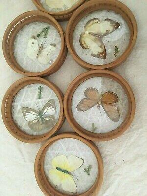 Dessous de verre vintage bambou papillon