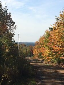Private Wood Land FOR SALE Pictou County