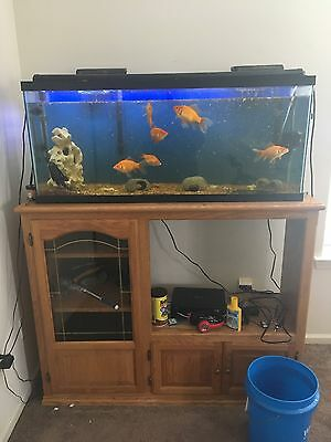 55 gallon fish tank with supplies