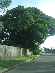 Ted and sue need som help/9 james st/tree @ sophia entrance Mackay Mackay City Preview