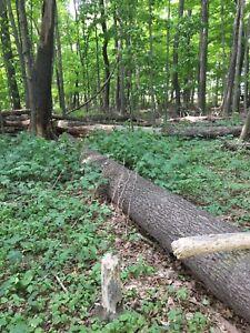 Free pine log