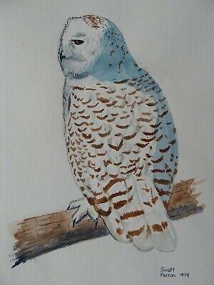 Scott Patton Art Snowy Owl Original Watercolor Painting, Wildlife, Nature - $30.00