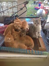 Kitten to a good home Kyeemagh Rockdale Area Preview