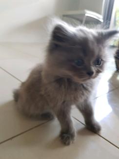 4 kittens left looking for forever homes 😍