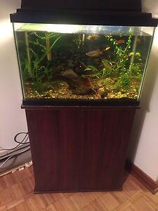 PRICE DROP! Freshwater setup