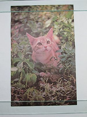 Vintage 1972 Poster Kitten Cat Cute Little Kitty Mini 17X11 Artko Studios Nos