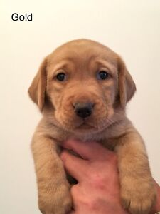 Adopt Dogs & Puppies Locally in London | Pets | Kijiji Classifieds