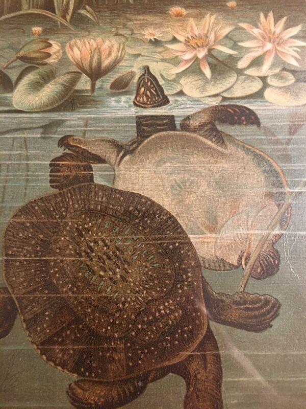 "Authentic 1800's Color Engraving ""Soft Turtles"" Selma Hess Original! Unique Gift"