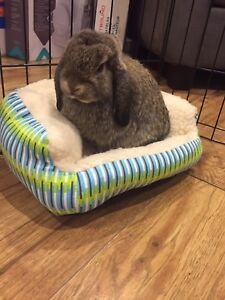Baby thumper needs a new home!