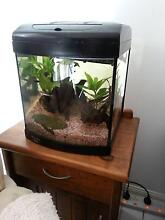AQUA ONE 320 TANK WITH BUILT IN LIGHT AND FILTER $100 Parkwood Gold Coast City Preview