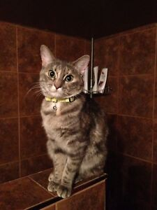Beautiful Female Cat for Rehoming