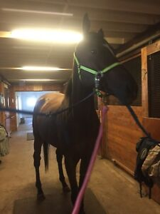 OTTB for Lease or Sale