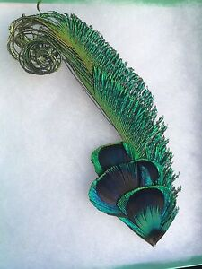 Genuine Peacock Feather Accessory
