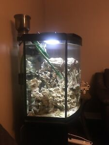 28 gallons bow front saltwater aquarium