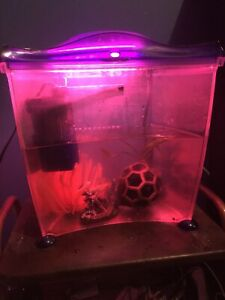 Fish tank, live plant and accessories