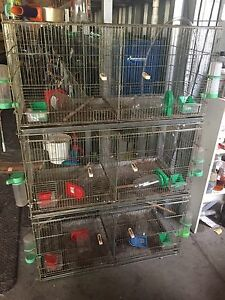 Bird Cages Medowie Port Stephens Area Preview