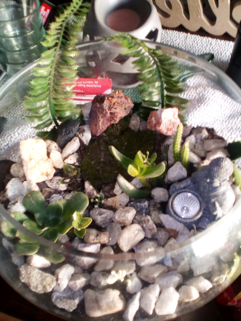 Glass Terrariums All Sizes Ranges Other Home Decor Gumtree