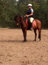All rounder pony for sale! Laguna Cessnock Area Preview