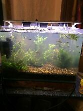 For sale planted tank Fairfield West Fairfield Area Preview