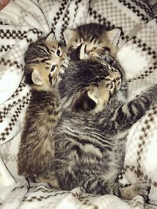 3 adorable kittens!!