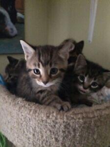 8 week old kittens!!!