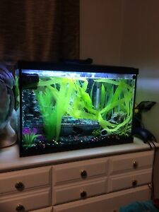 20g Fish tank for sale. Brand new. Everything included