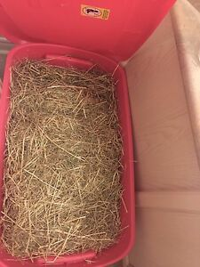 HALF BALE TIMOTHY HAY - guinea pigs, rabbits, chinchillas