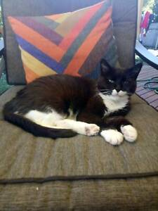 Black and white cat looking for home