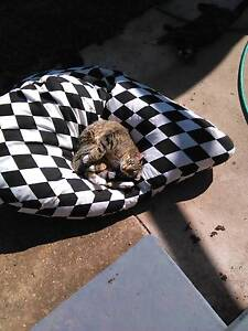 female cat Whyalla Stuart Whyalla Area Preview