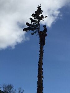 Tree Removals and Trimming