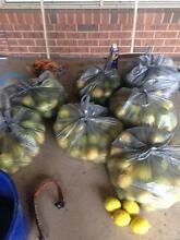 Limes for sale Echuca Campaspe Area Preview